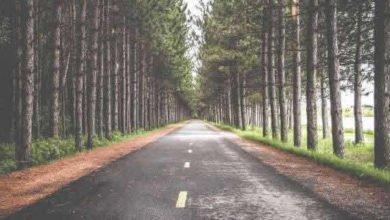 Photo of Yolun Kenarına Diken Eken Adam – İbretlik Hikayeler